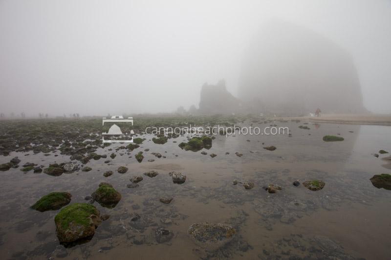 Exploring Tidepools in the Fog