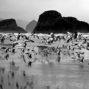 Flock Takes Flight