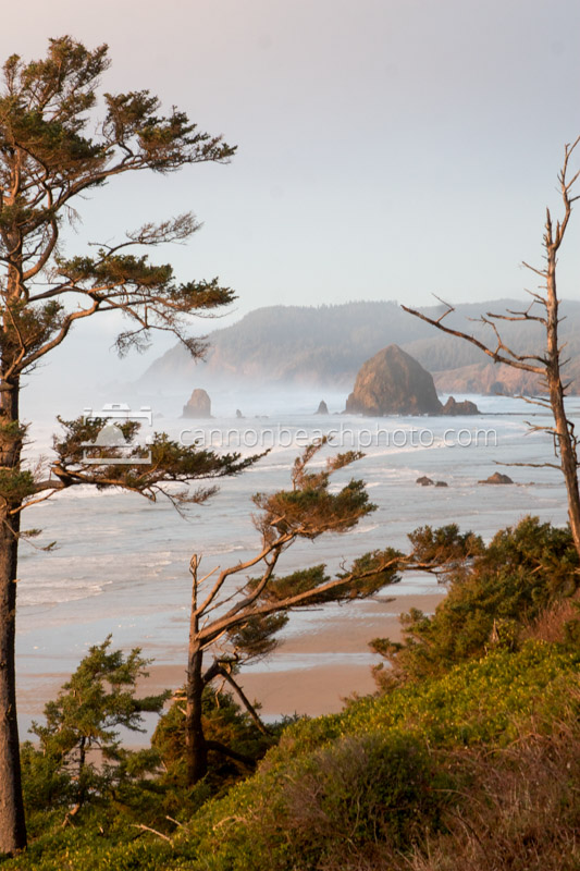 Haystack Rock Thru the Trees - North