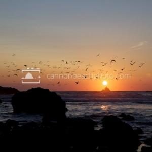 Seagulls Flying Over Tillamook Lighthouse