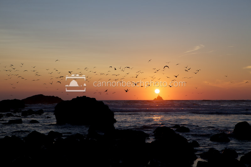 Seagulls Flying Over Tillamook Lighthouse