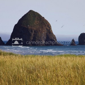 Summer in Dunes in Cannon Beach