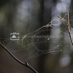Backlit Spider Web
