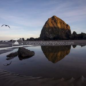 Haystack Rock, Morning Light, Seagull Flight