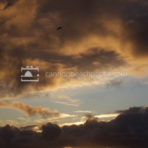 Lone Seagull Thru a Vertical Sunset
