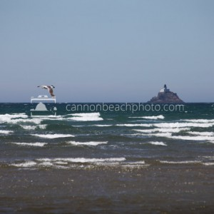 Seagull Flight and Tillamook Lighthouse