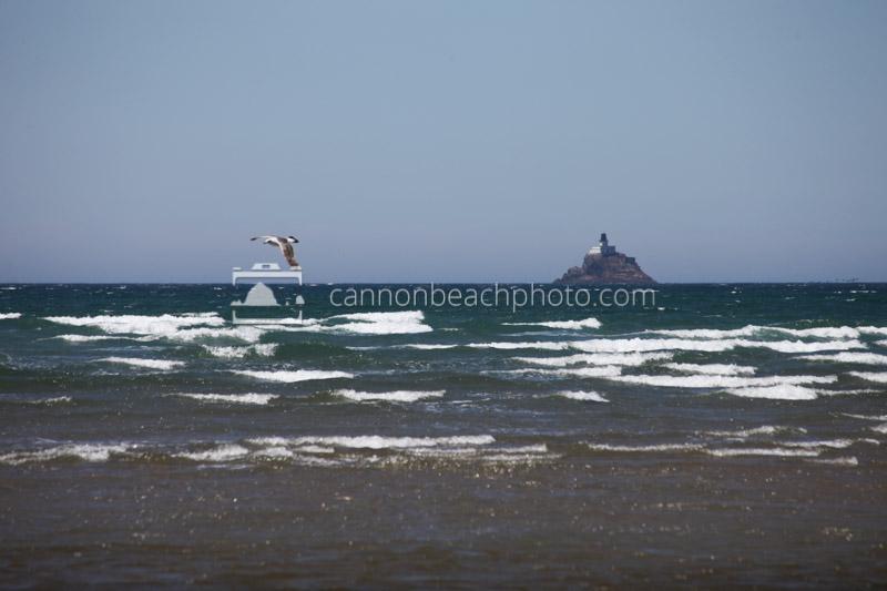 Seagull Flight and Tillamook Lighthouse