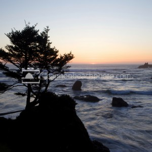 Sunset Tree and the Pacific Ocean