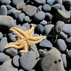 Starfish Washed Ashore