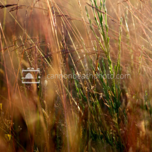 Coastal Vegetation Macro