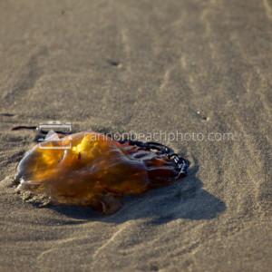 Jellyfish Glow on the Sand