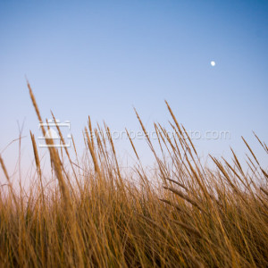 Dune Grass and Moon