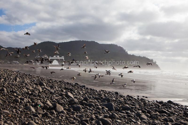 Seagull Flight, Seaside, Oregon