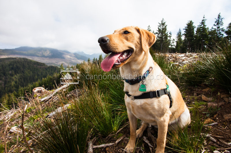 Bella, The Hiking Dog