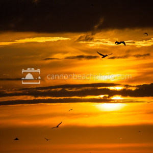 Birds in Flight at Sunset