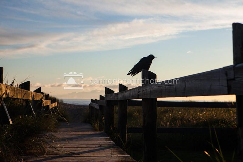 Crow Boardwalk Perch
