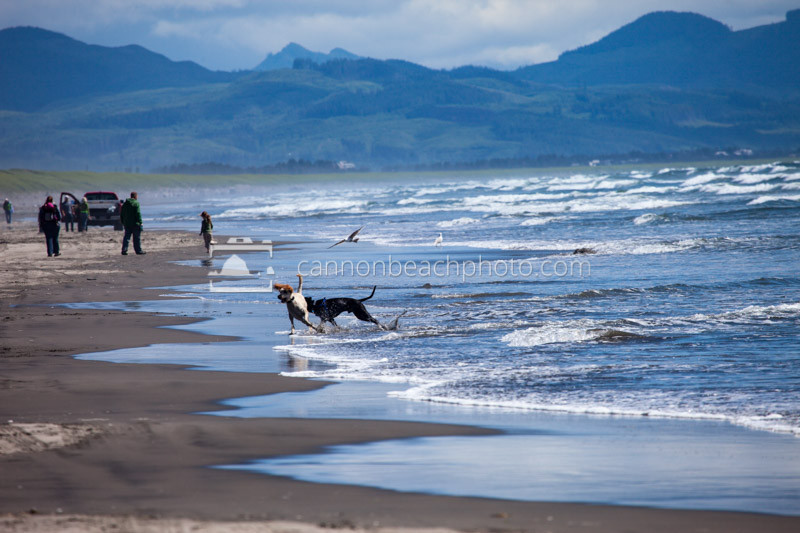 Dogs Play on Fort Stevens Beach, Oregon Coast