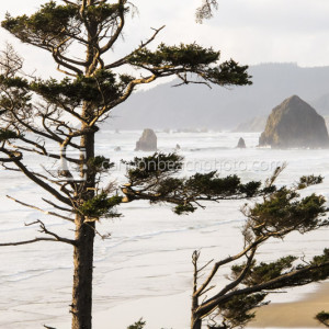 Glowing View of Cannon Beach, Oregon Coast Photography