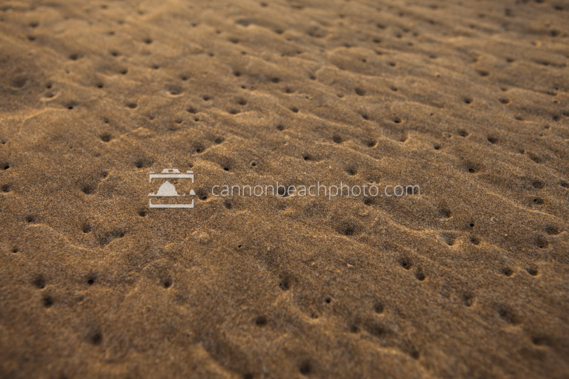 High Tide Sand Texture