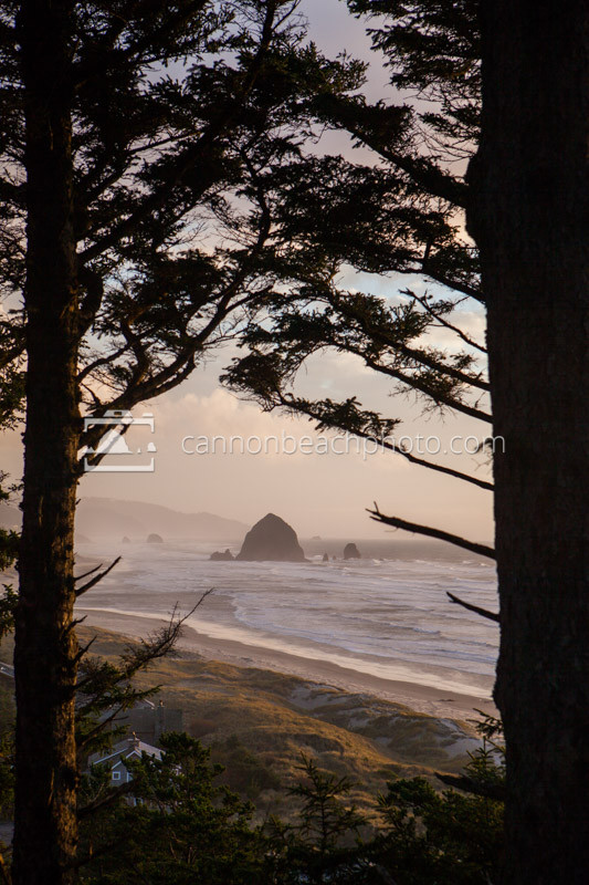 Golden glow illuminates the evening sky through the trees in Cannon Beach, Oregon.
