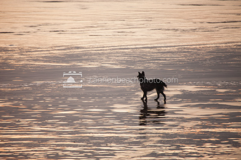 Offleash Dog on Golden Beach