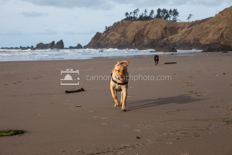 Pet Friendly Beach Dog 3