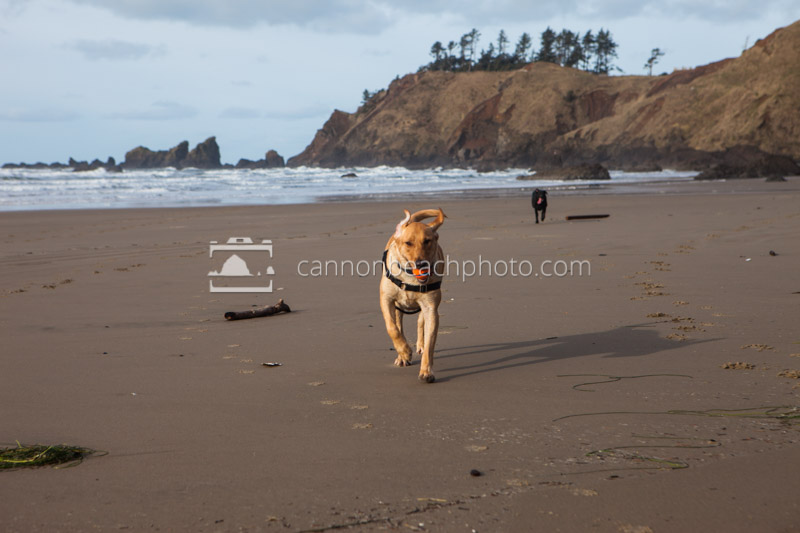 Is Cannon Beach Dog Friendly