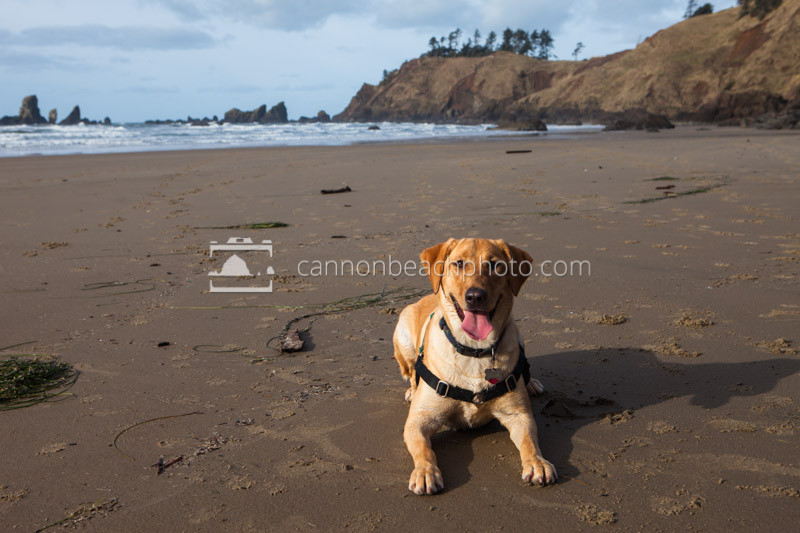 Pet Friendly Beach Dog