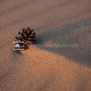Pinecone in the Sand