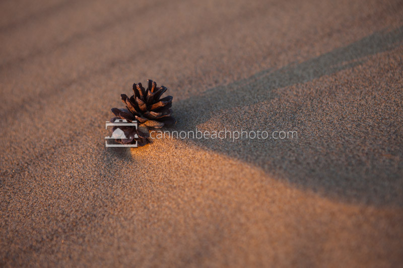 A pinecone gathers sand and time.