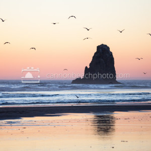 Seagulls Flight Over The Needles, Oregon Coast Sunset 1