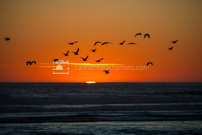 Silhouetted seagulls soar silently above the sublime sea at suns