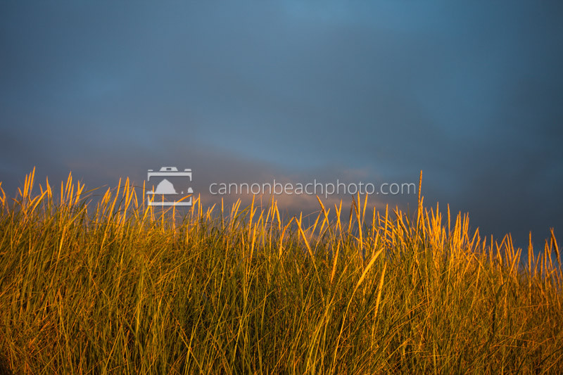 Sunset Dune Grass with Blue Sky