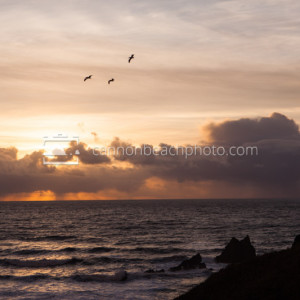 Three Pelicans in Flight at Sunset over the Pacific