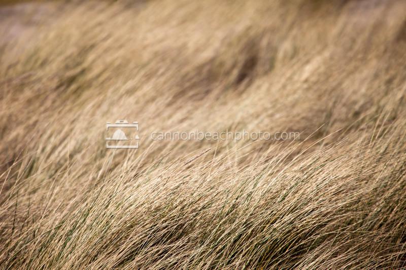 Golden Autumn Dune Grass