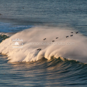 Pelican Flight Over the Crashing Waves, Incredible Oregon Coast