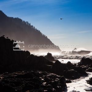 Seagull Perch Below Tillamook Head, Seaside, Oregon