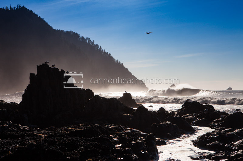 Seagull Perch Below Tillamook Head, Seaside, Oregon