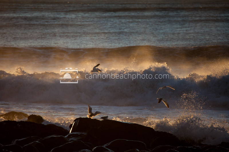 Seagulls Flying with Golden Waves Crashing