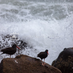 Shore Birds with Waves Crashing