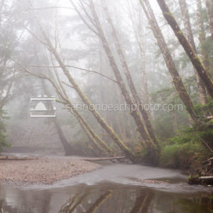 Ecola Creek in the Fog - Vertical