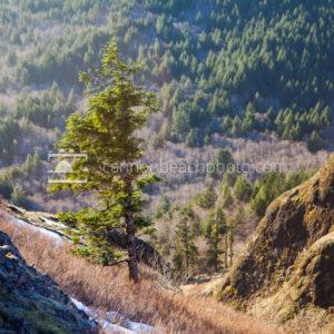 Saddle Mountain Chute