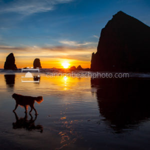 Canine Cannon Beach, Sunset Stroll
