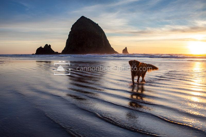 Dog Walk at Haystack Rock - Cannon Beach Photo