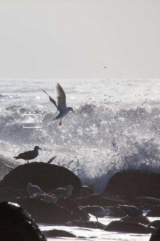 South Beach Seagull Phone