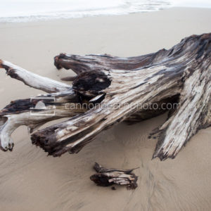 Beach Driftwood in the Sand