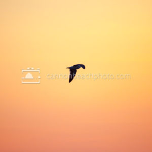 Beautiful Gradient and Seagull Flight