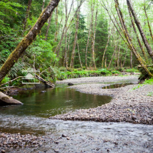 Ecola Creek Meandering