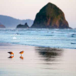 Sandpipers and Haystack Rock, Horizontal