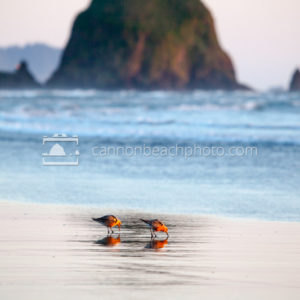 Sandpipers and Haystack Rock, Vertical
